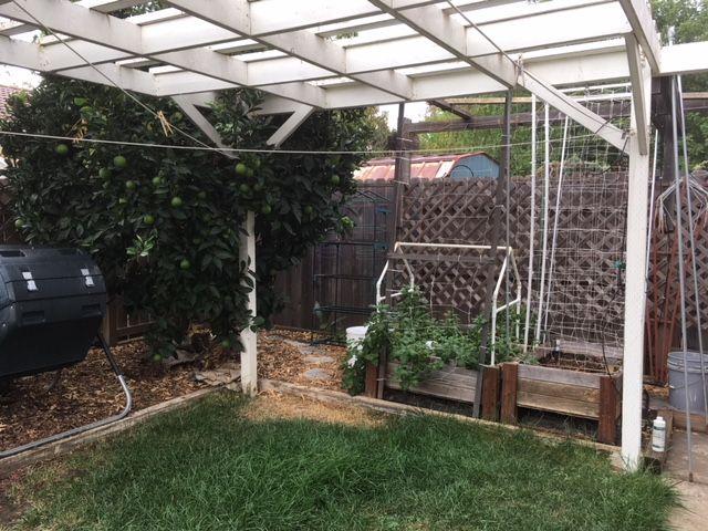 Sanderson's Urban SFG in Fresno, California - Page 5 Garden23