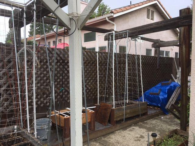 Sanderson's Urban SFG in Fresno, California - Page 5 Garden24