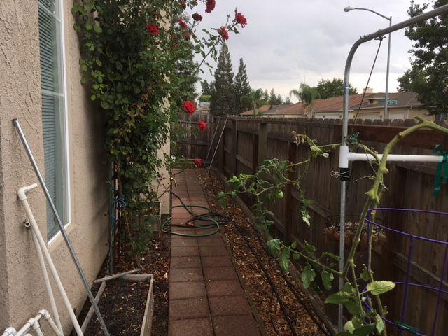 Sanderson's Urban SFG in Fresno, California - Page 5 Garden26
