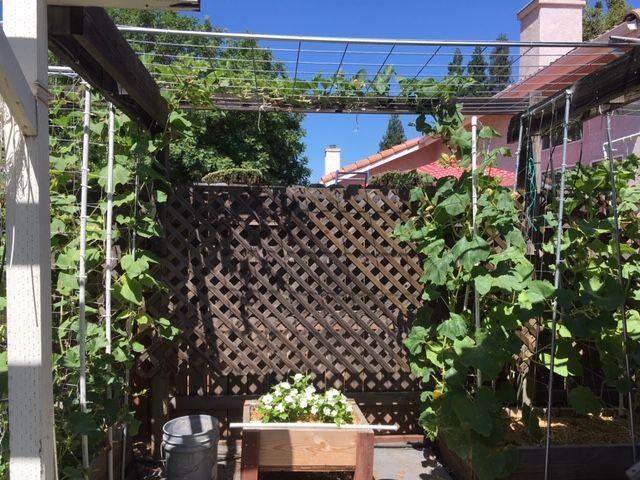 Sanderson's Urban SFG in Fresno, California - Page 7 Garden54