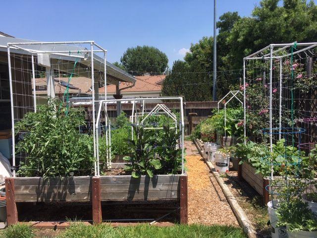 Sanderson's Urban SFG in Fresno, California - Page 7 Garden56