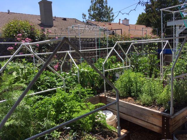 Sanderson's Urban SFG in Fresno, California - Page 7 Garden57