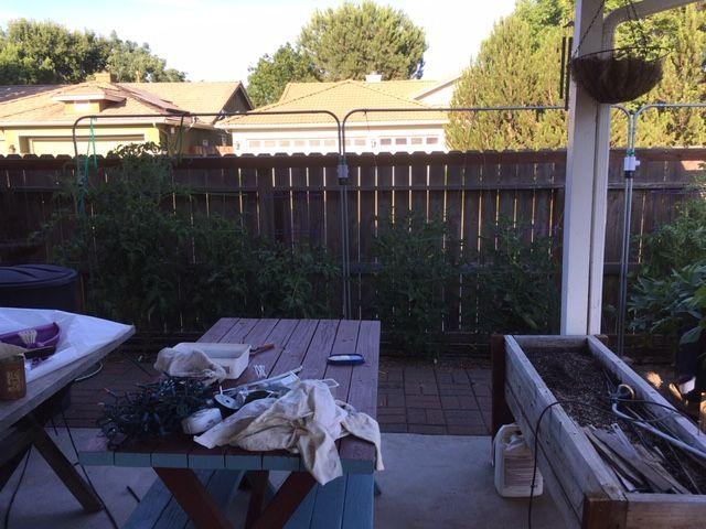 Sanderson's Urban SFG in Fresno, California - Page 7 Garden58