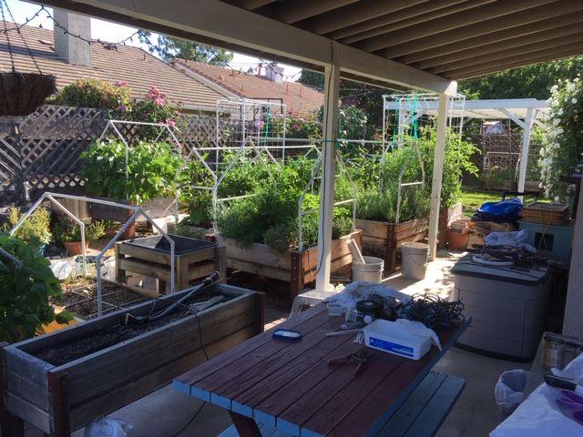 Sanderson's Urban SFG in Fresno, California - Page 7 Garden59