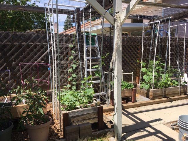 Sanderson's Urban SFG in Fresno, California - Page 8 Garden77