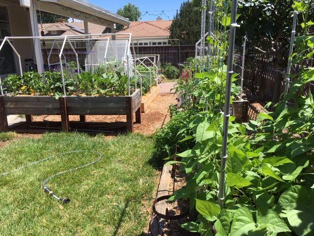 Sanderson's Urban SFG in Fresno, California - Page 8 Garden80