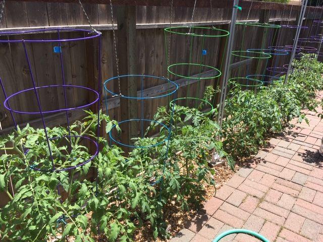Sanderson's Urban SFG in Fresno, California - Page 8 Garden82