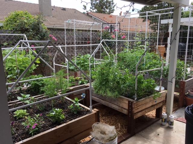 New to SFG from Oklahoma Garden83