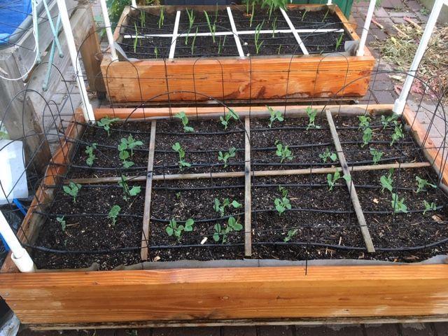 Make a SFG grid Garden88