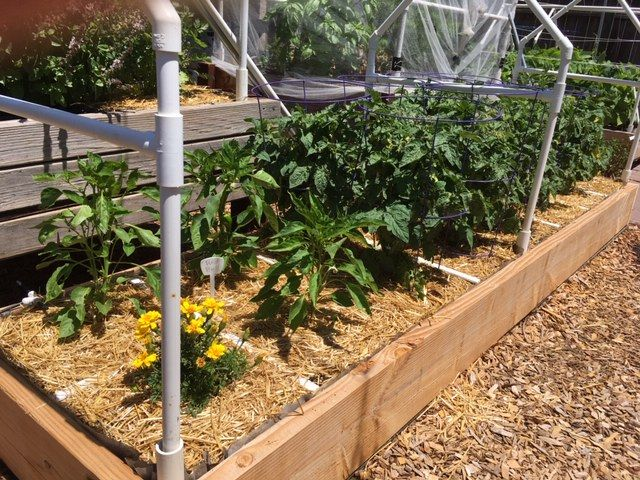 elevated raised bed over cemented area Garden99