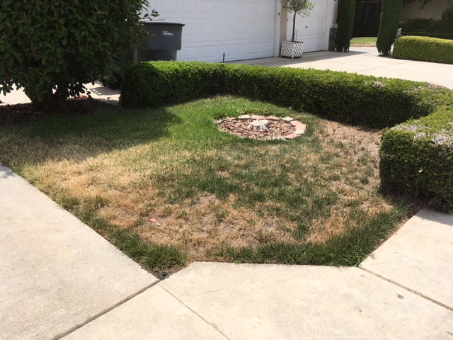 Northern California & Coastal Valleys - What are you doing this month? - Page 15 Lawn_d17