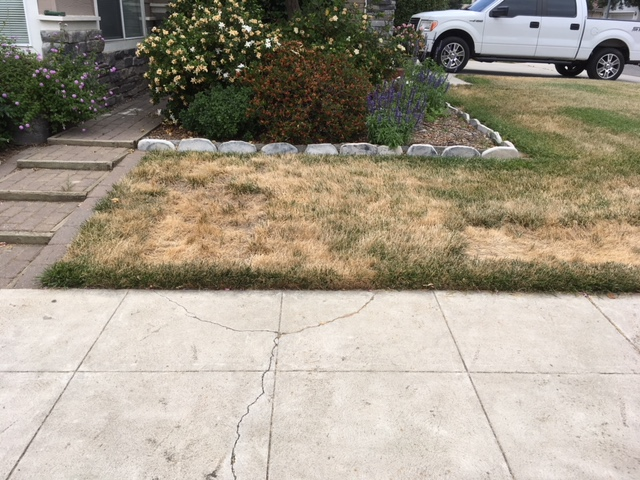 Northern California & Coastal Valleys - What are you doing this month? - Page 15 Lawn_d18