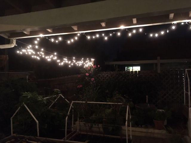 Sanderson's Urban SFG in Fresno, California - Page 5 Lights10