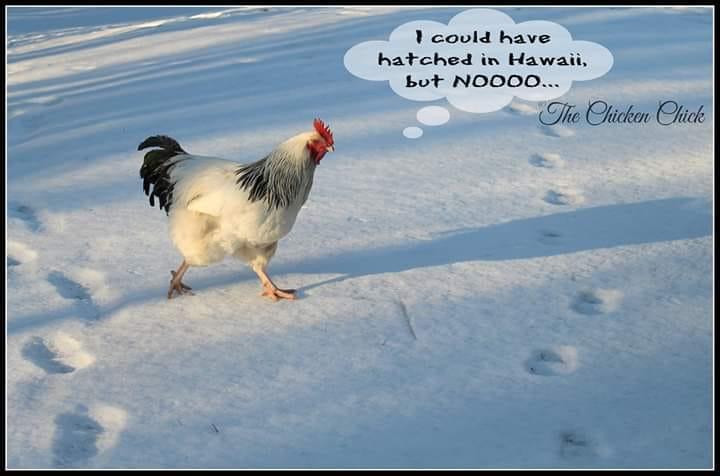 Holy snow Batman!  - Page 8 Meme_c12