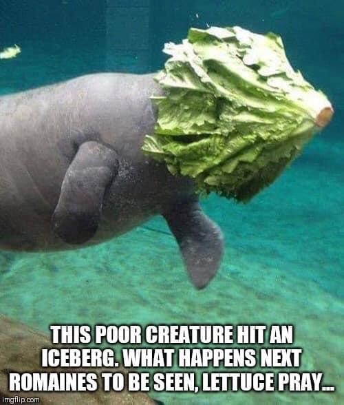 Senseless Banter... - Page 31 Meme_m10