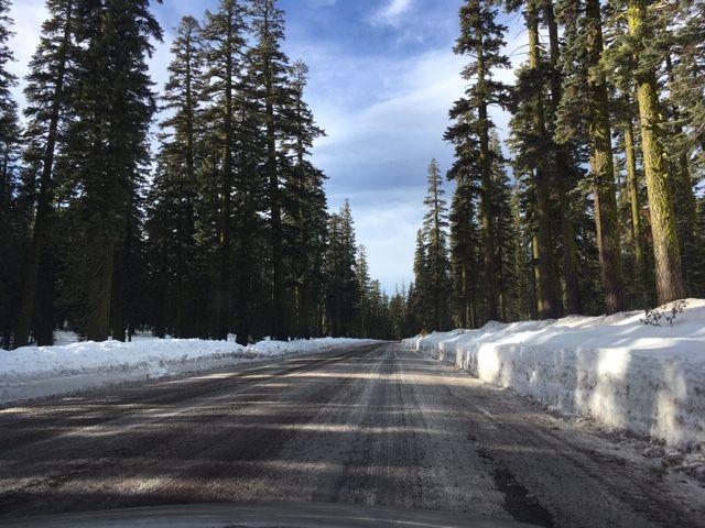 Sanderson's Road Trip in Northern Sacramento Vally, California Mt_sha14