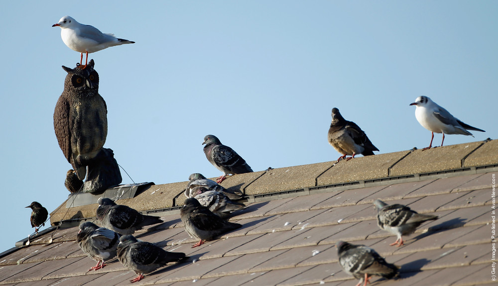 Woodpeckers! Pest_c10