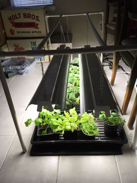 Poor man's grow light station Seedli30