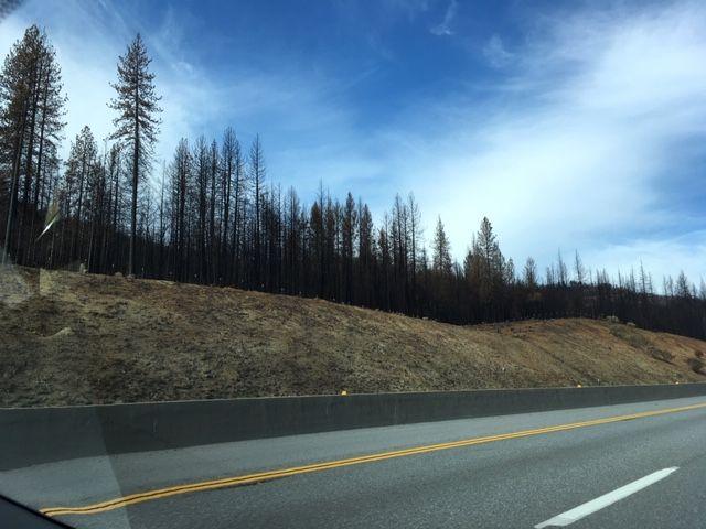 Sanderson's Road Trip in Northern Sacramento Vally, California Shasta13