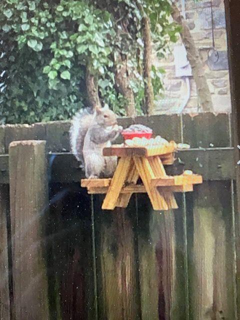 Squirrel holes! Squirr12