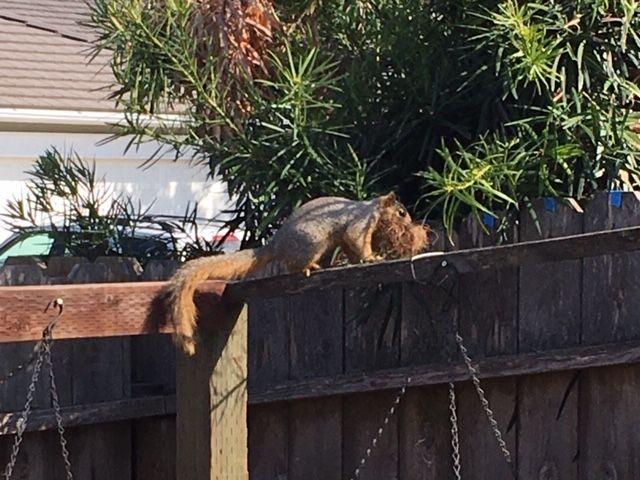 Squirrel holes! Squirr14