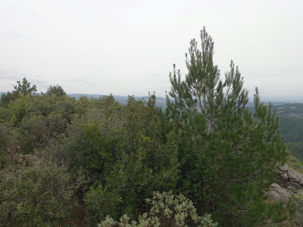 Montagne Noire Dsc09917