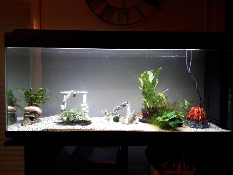 Nouvel aquarium besoin de conseils :) 110