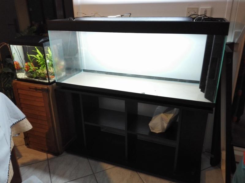 Nouvel aquarium besoin de conseils :) Img_2013