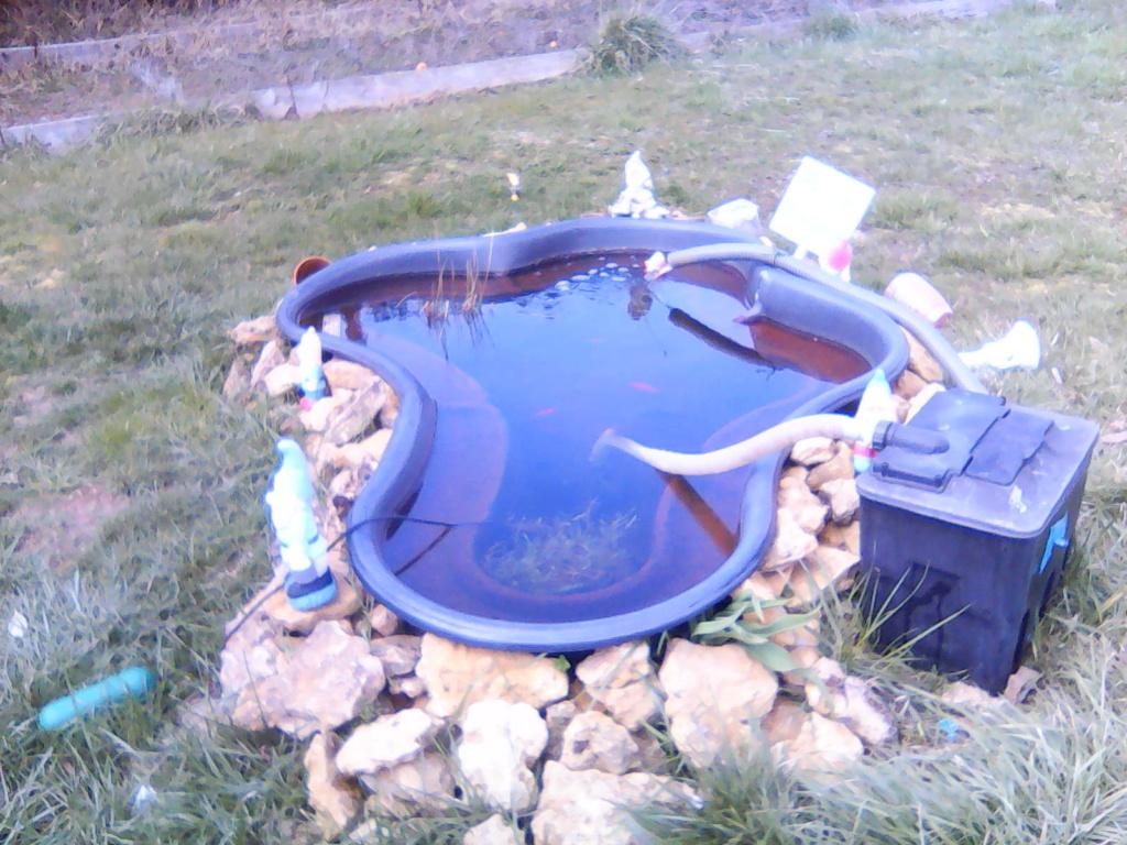 Mon bassin de jardin - Page 12 Img00219