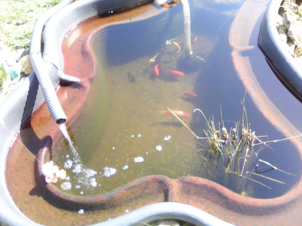 Mon bassin de jardin - Page 12 Img00323