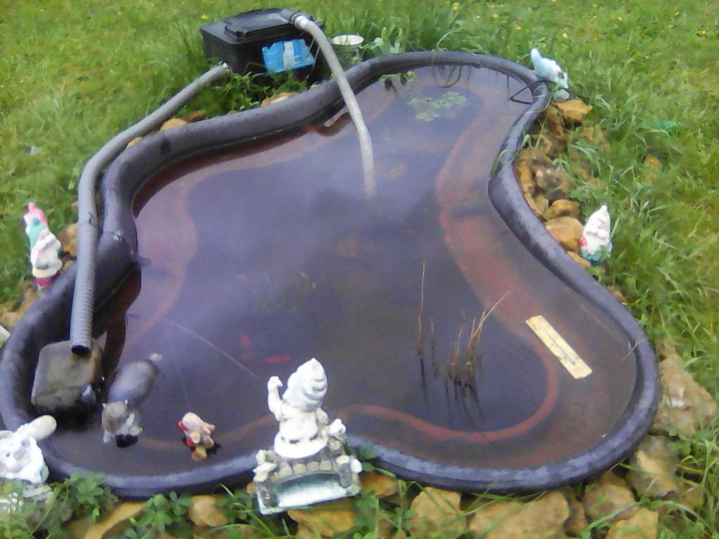 Mon bassin de jardin - Page 13 Img00510