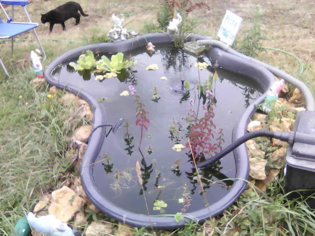 Mon bassin de jardin - Page 16 Img00612
