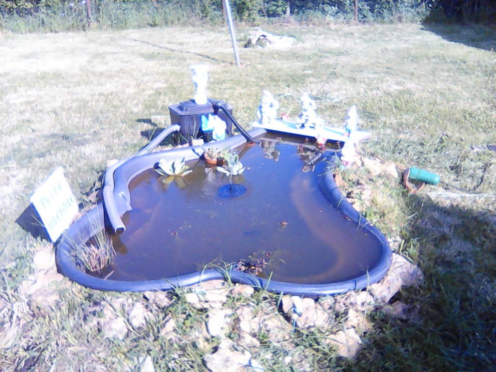 Mon bassin de jardin - Page 18 Img02310