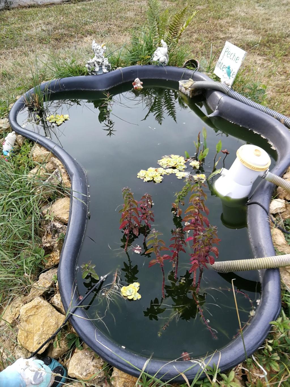 Mon bassin de jardin - Page 15 Img_2025