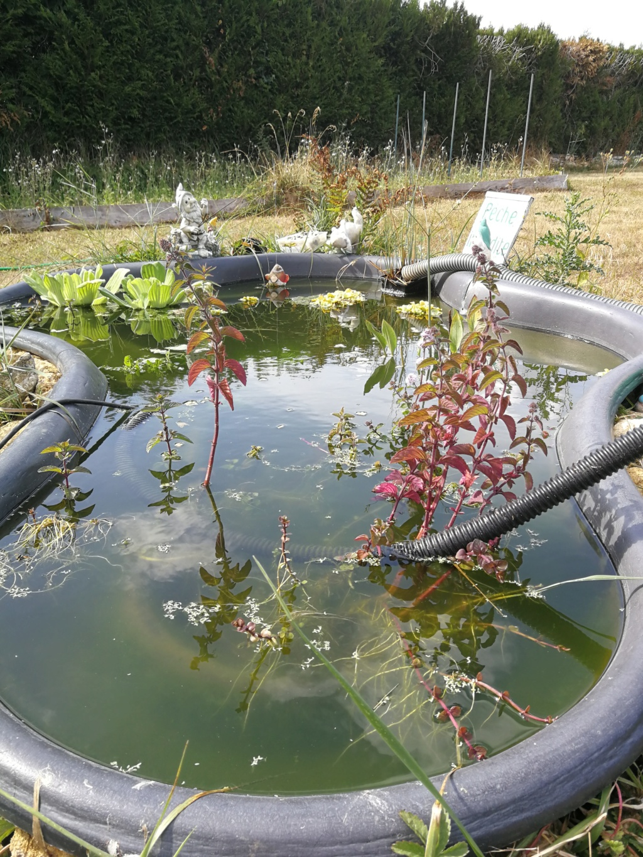 Mon bassin de jardin - Page 16 Img_2029