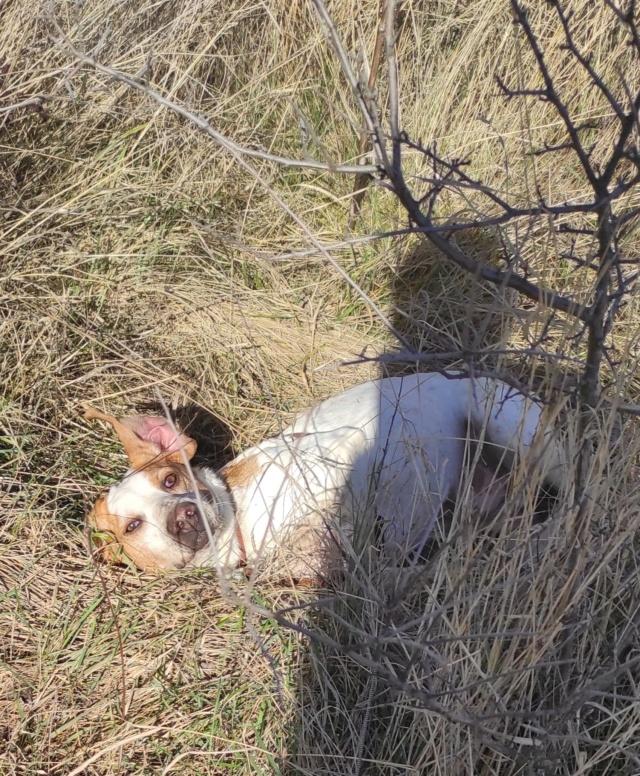 ABU (chien mâle croisé courant) Réservé  - Page 2 16135810