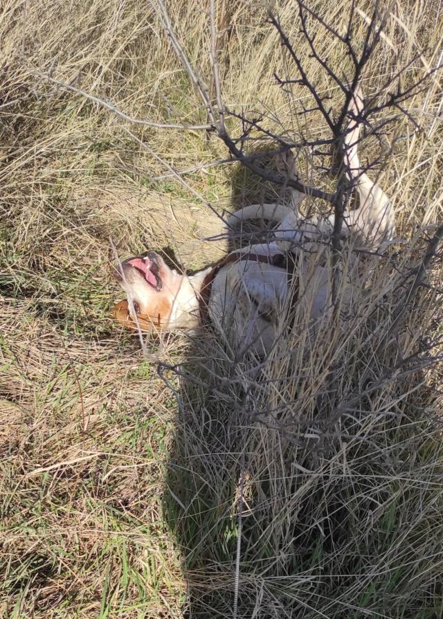ABU (chien mâle croisé courant) Réservé  - Page 2 16135811