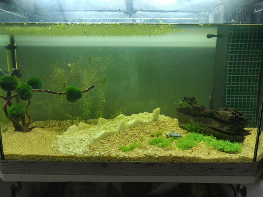 Nouveaux aquariums 15701710