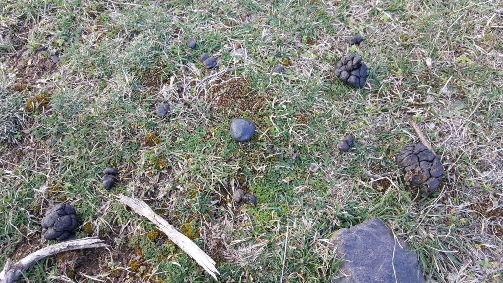 Chasse a la météorite tombé en ARDECHE le 27/02 - Page 2 20190314