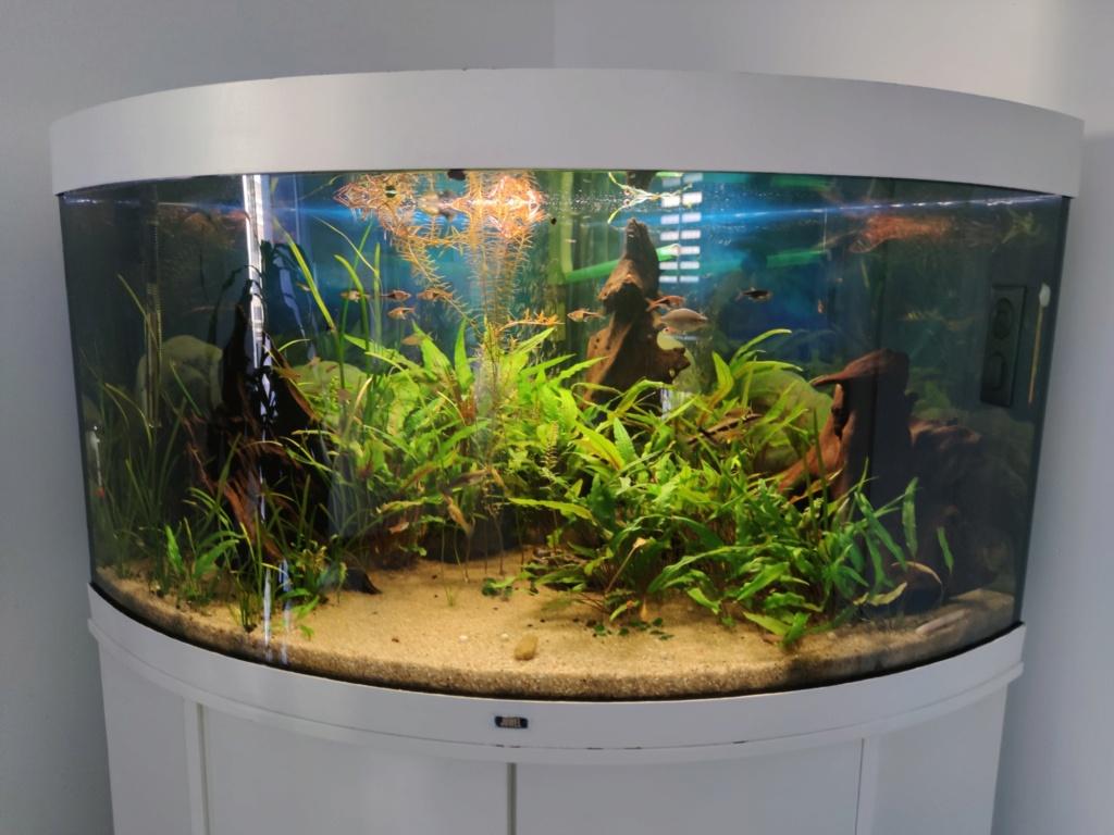 Le renouveau coté aquariums  Picsar10