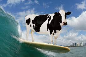 Lake Level Surf10