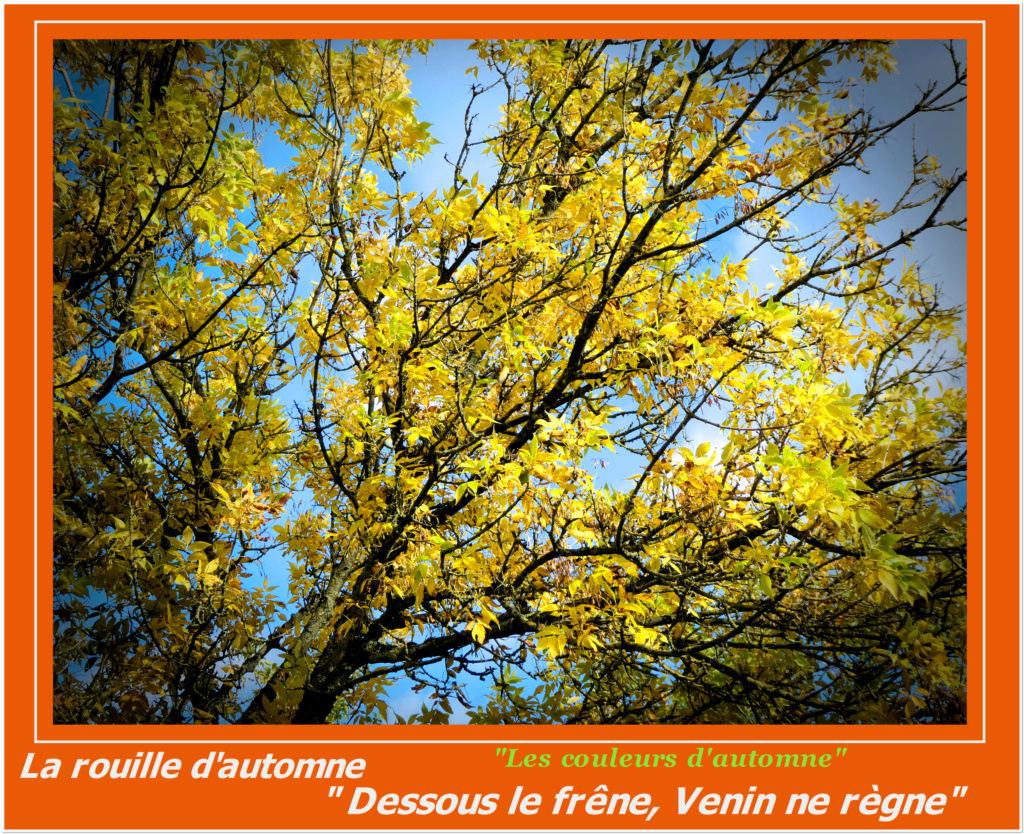 Le début de l'automne 2 Aa_frz10