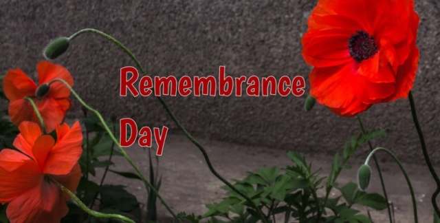Will poppy day soon be one more British tradition that's wiped out? Rememb13