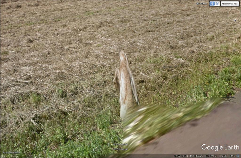 Le coup du lapin vu par la Google car... (Street View ) Lapin310