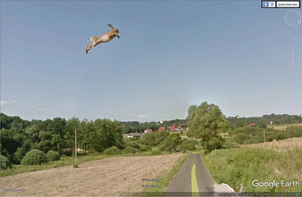 Le coup du lapin vu par la Google car... (Street View ) Lapin410