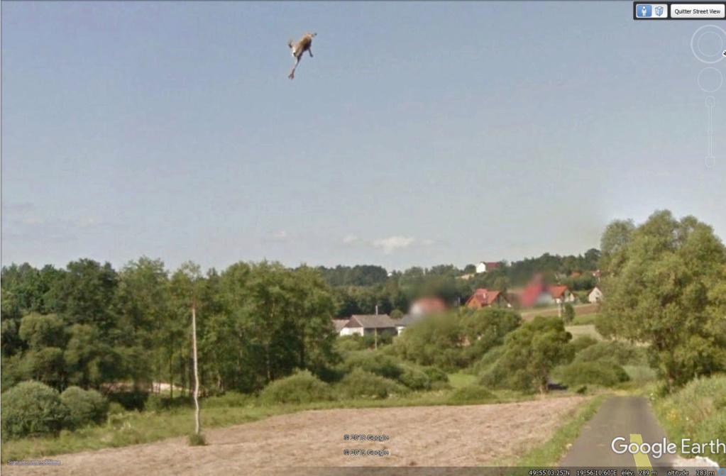 Le coup du lapin vu par la Google car... (Street View ) Lapin510