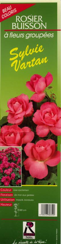 où trouver le rosier Sylvie Vartan ? Rosier11