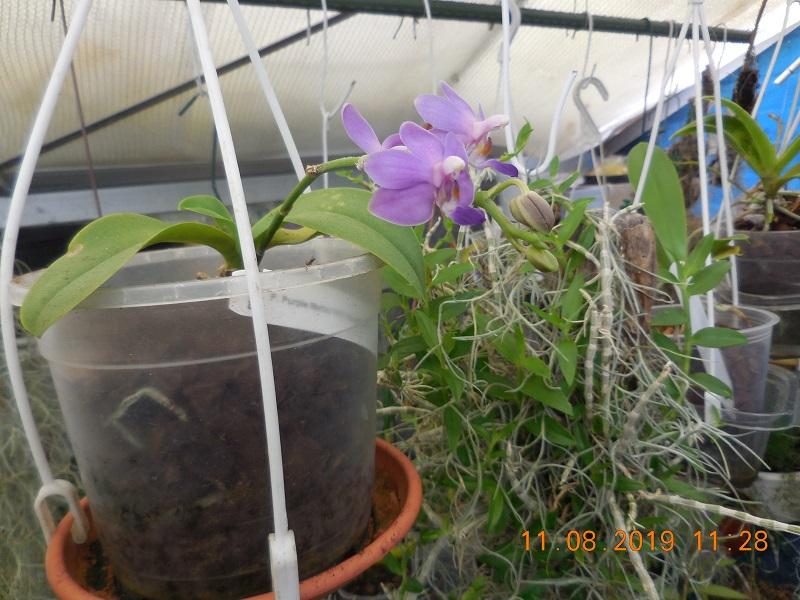 quelques plantes en fleurs Dscn1510