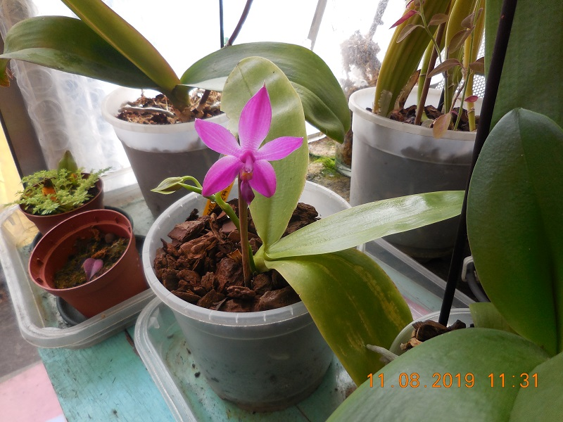 quelques plantes en fleurs Dscn1511