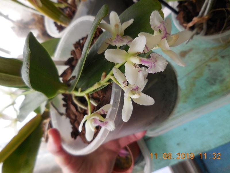 quelques plantes en fleurs Dscn1512